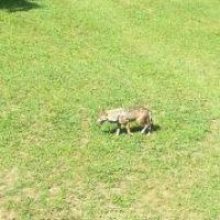 Guarda questa foto sull'evento Sulle tracce del lupo nella Foresta delle Lame a Rezzoaglio