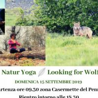Naturyoga - looking for wolf
